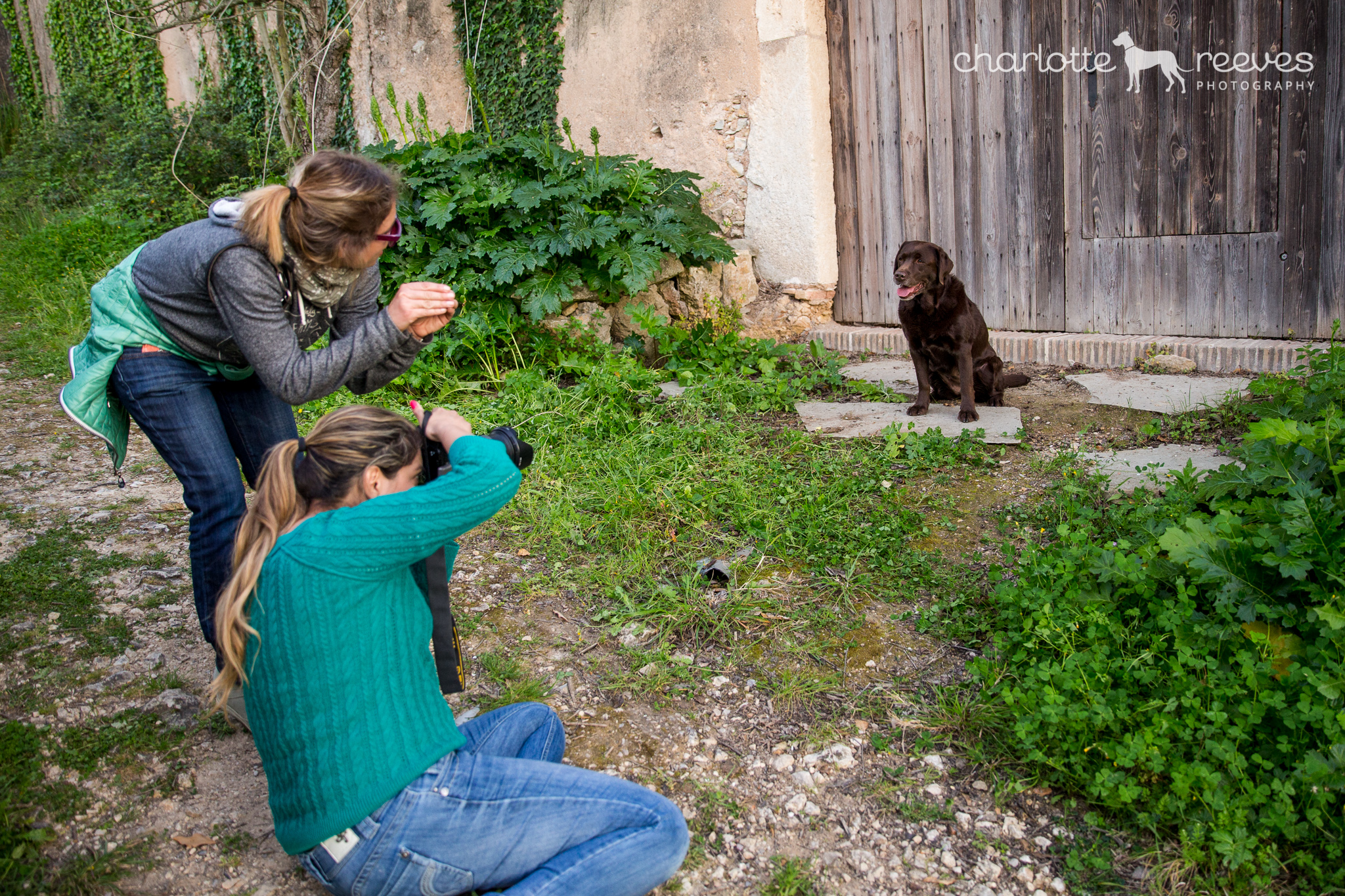 behind the scenes pet phtotography course