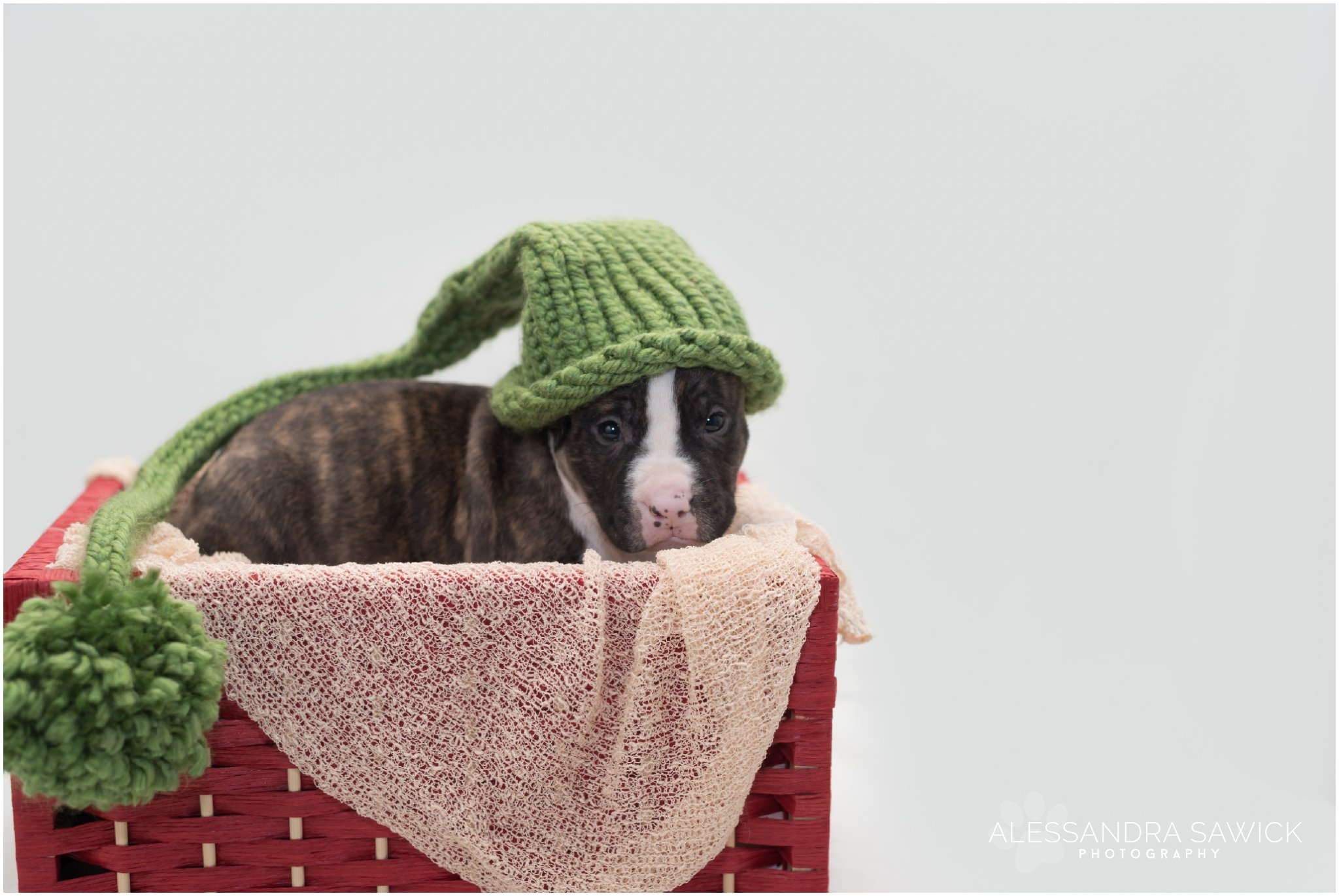 newborn pet photography