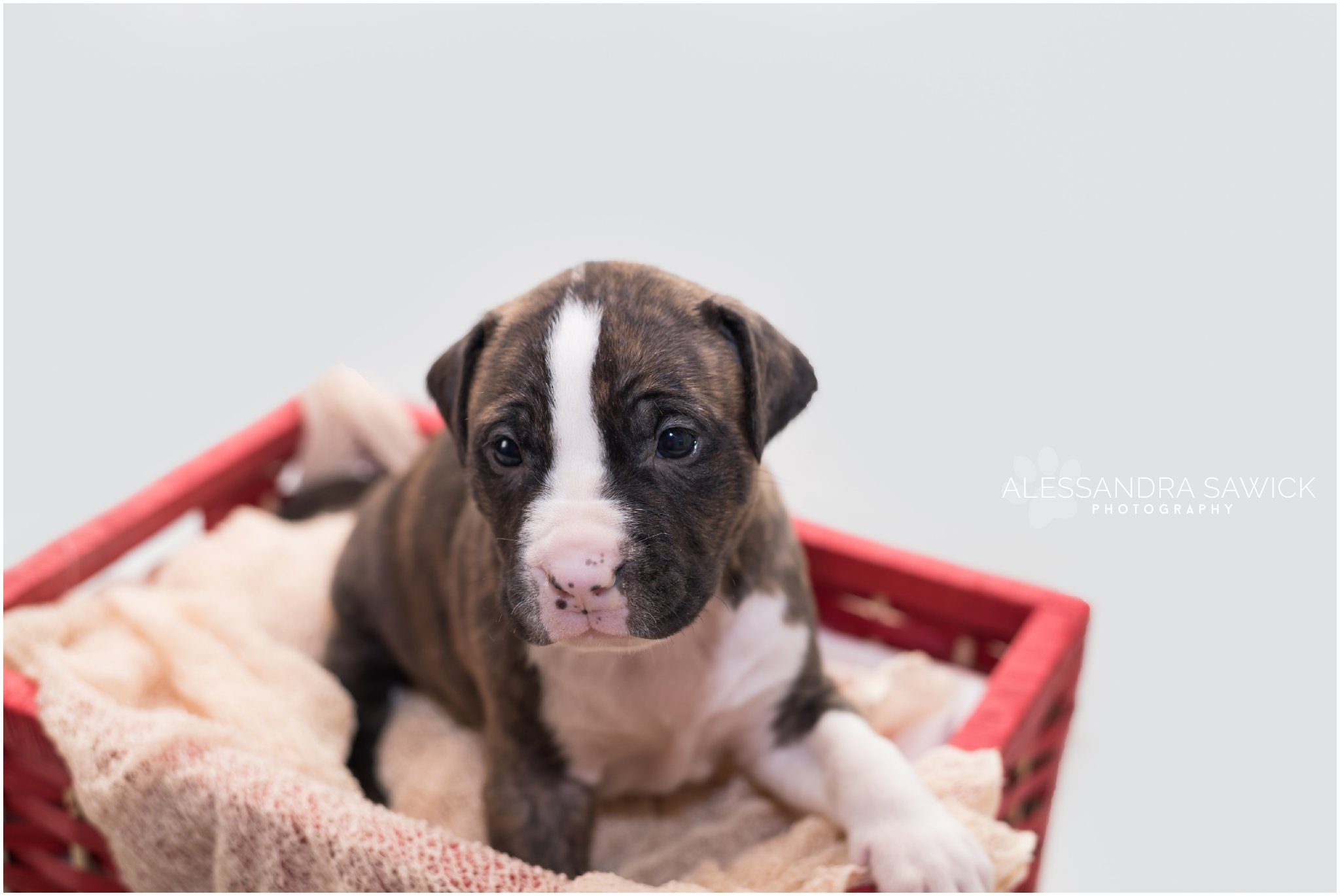 newborn pet photos