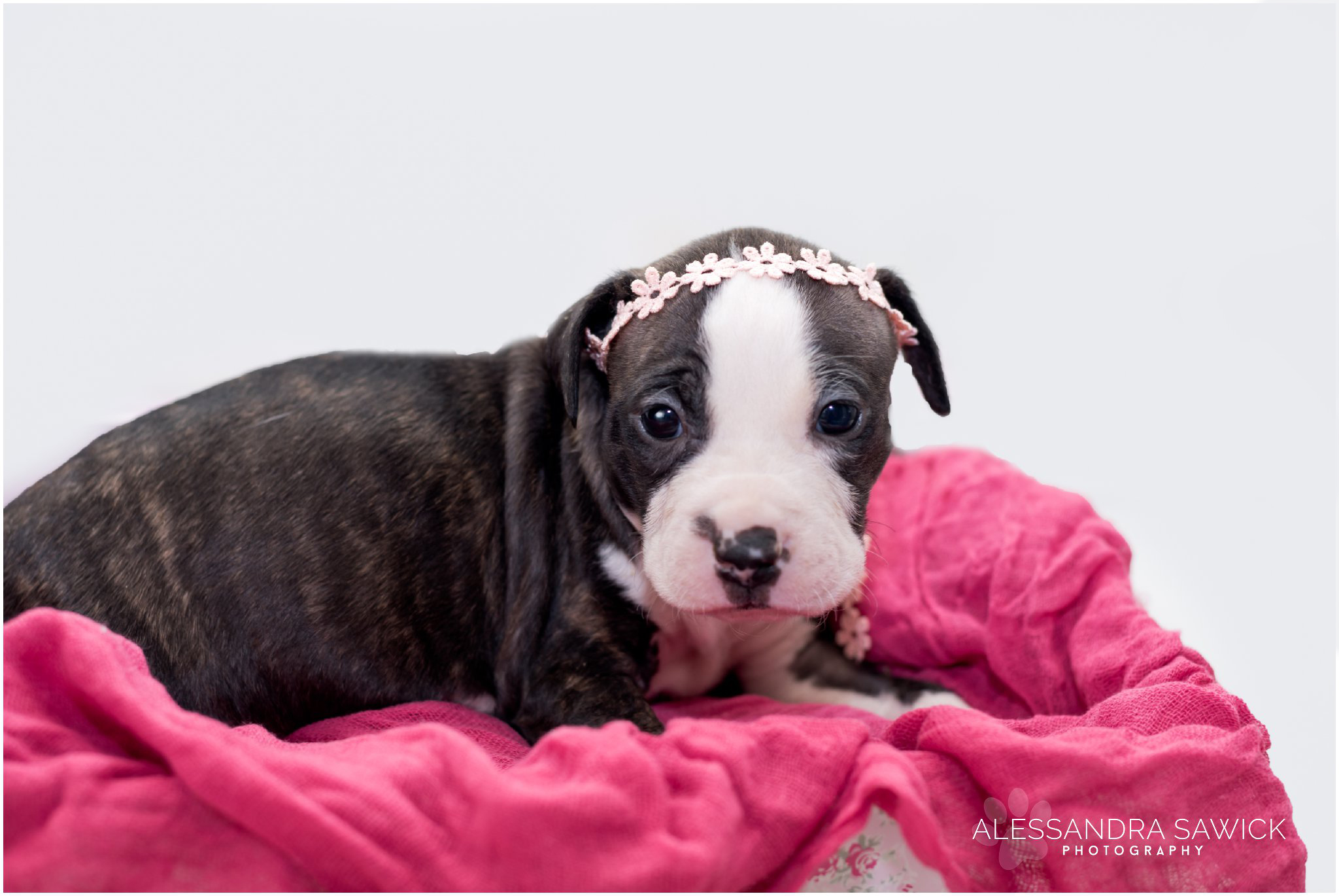newborn puppy photo session