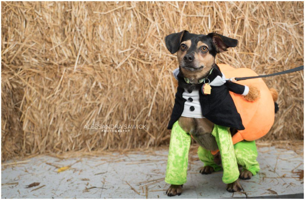 Cute dog costume for Halloween