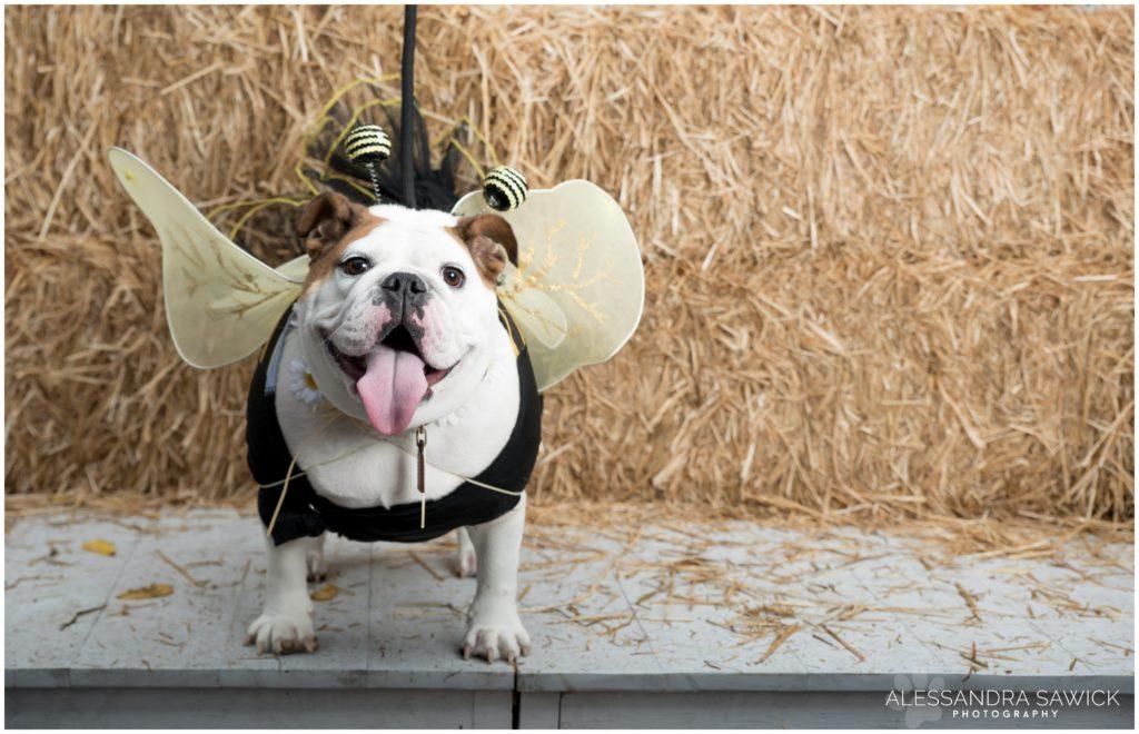 Bee Dog Halloween Costume