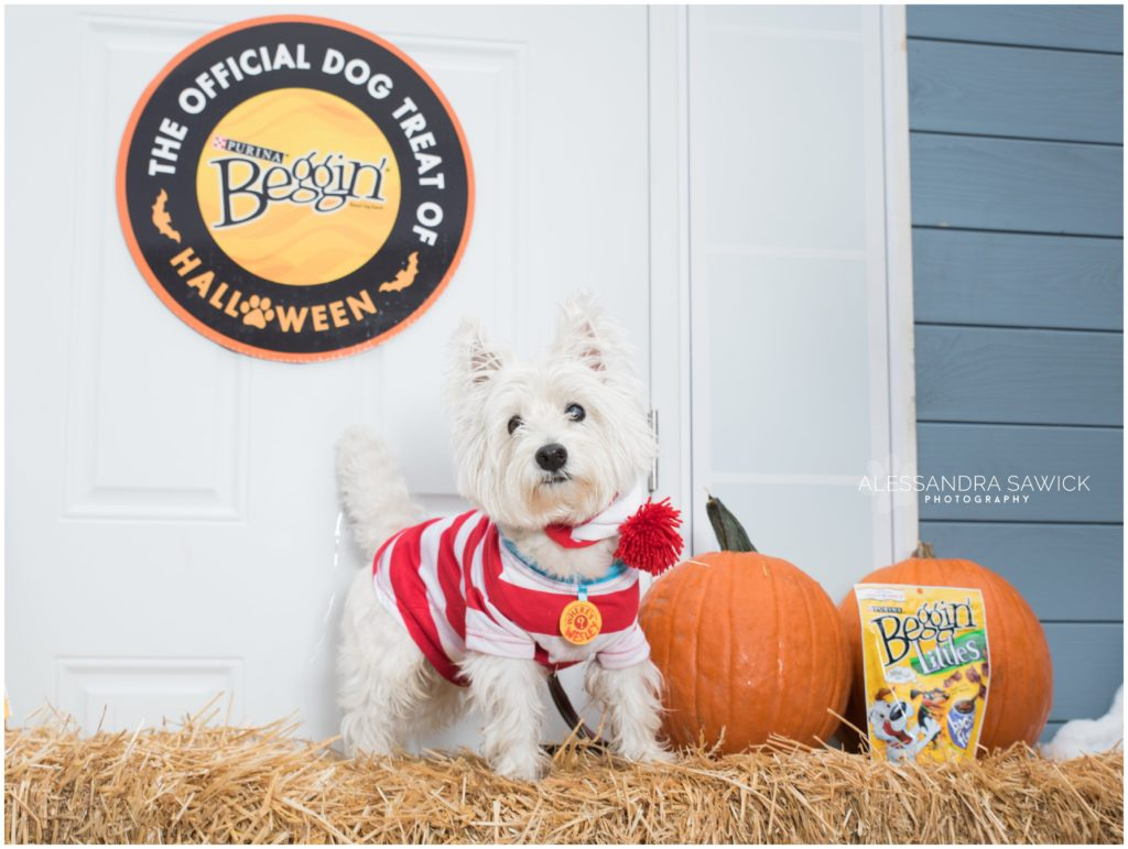 The official dog treat of Halloween