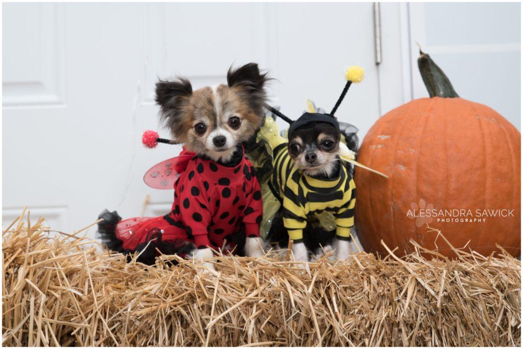 Adorable Dog Halloween costumes