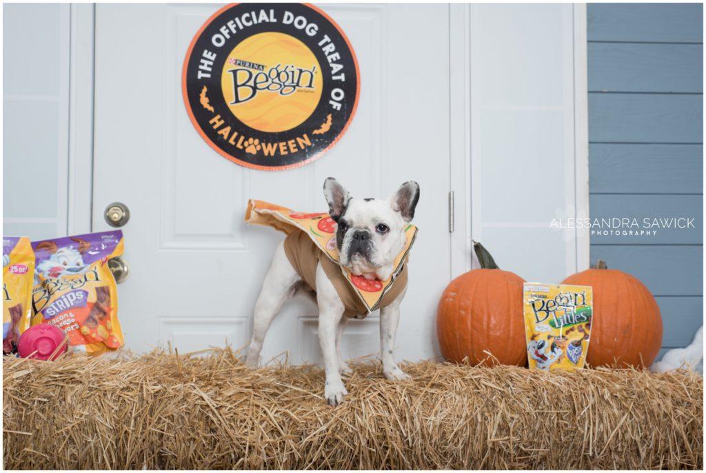 Frenchie Bulldog at the NYC Halloween Dog Parade