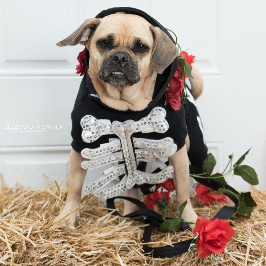 Dog costume for Halloween
