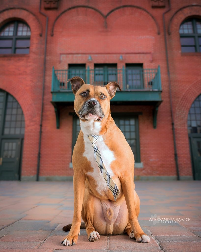 hudson county pet photography