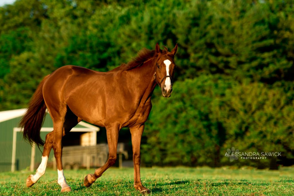 new Jersey Horse photography